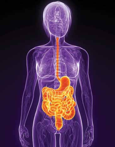 A Healthy Digestive System Means A Healthy Brain